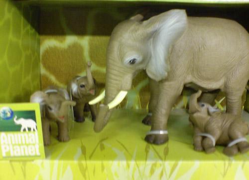 AnimalPlanet Elefanten-Quälerei